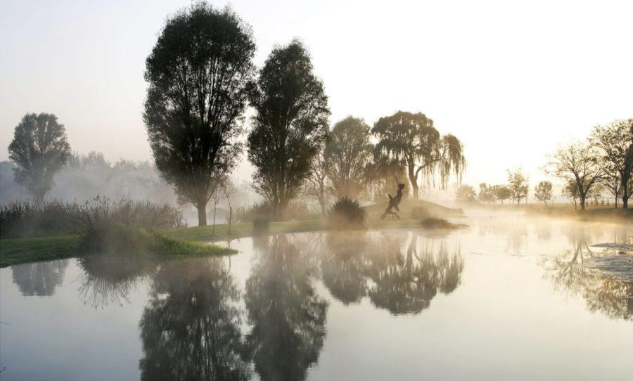 Dimmig skog och vatten vid Wanås Skulpturpark.