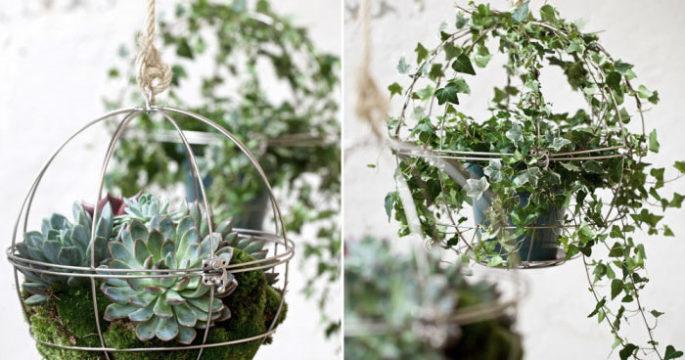 växter på a