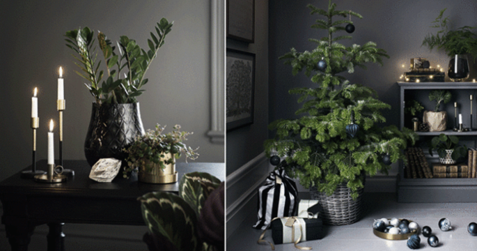 Här är de 4 största växttrenderna i jul