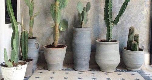Balkongväxterna som överlever utlandssemestern